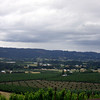 This photo and the next one shows the wonderful views of the Dundee Hills from Anderson Family Vineyards.