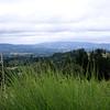 A nice shot of the view at Lange Vineyards.