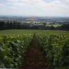 I occasionally got my camera out Friday. I took this shot of Drouhin vineyards and the valley.