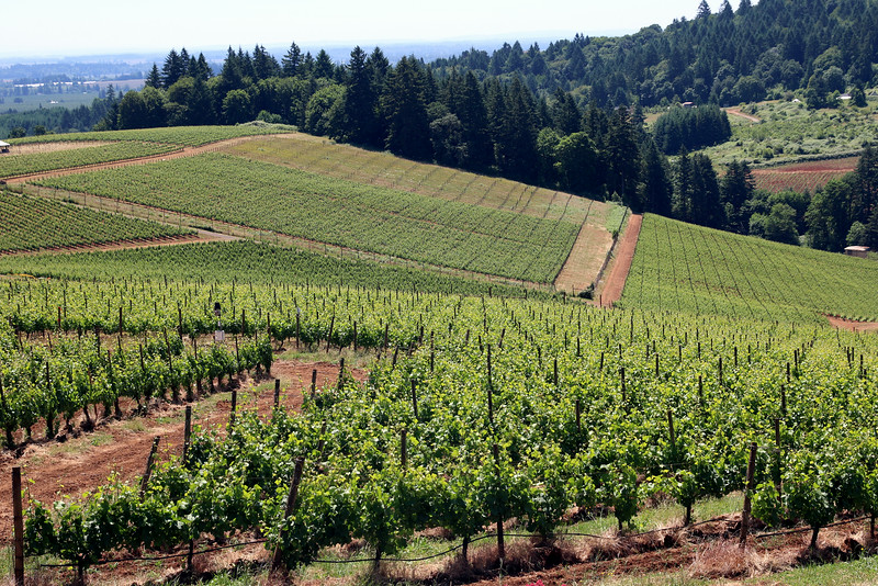 The Winderlea vineyards provide a stunning lunch-time view.