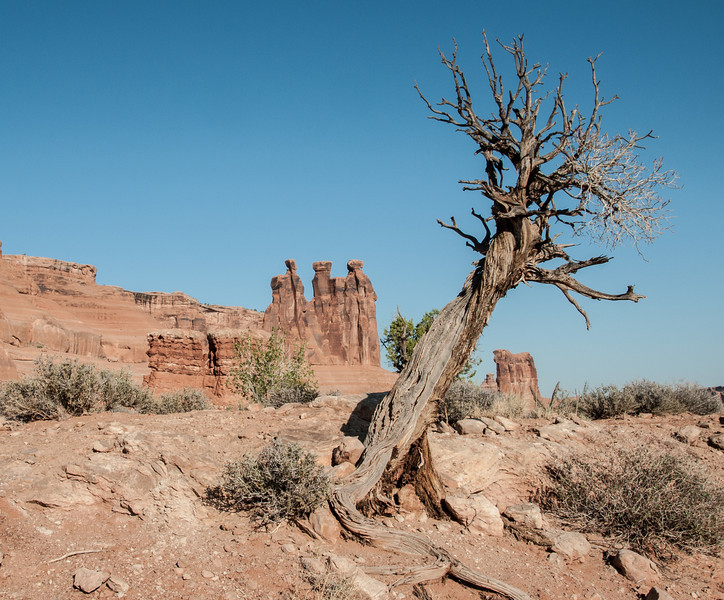 • Location - Arches National Park<br /> • Utah Juniper Tree in front of the Three Gossips