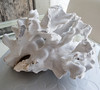 White coral decoration Eileen has in her living room