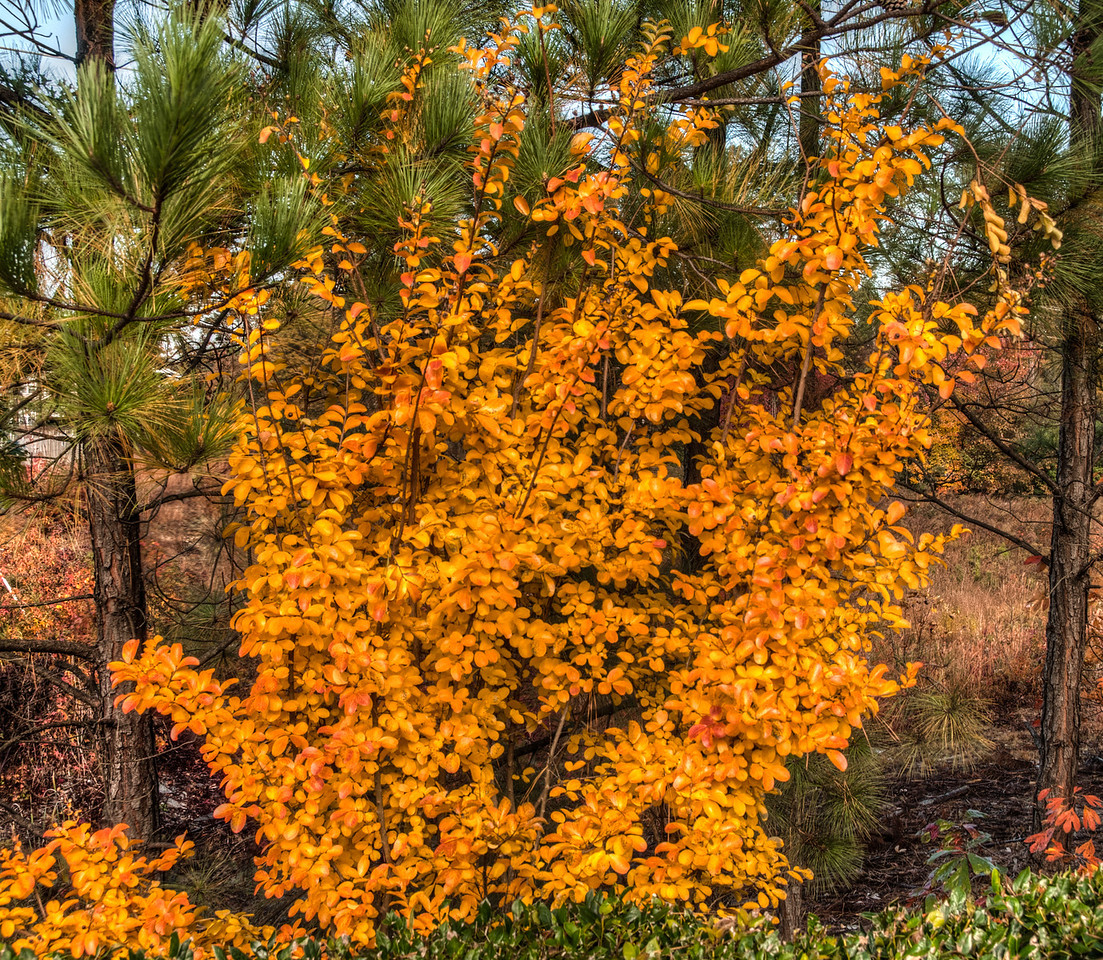 Fall color photos I took around the Hyatt House in Richmond-West, VA