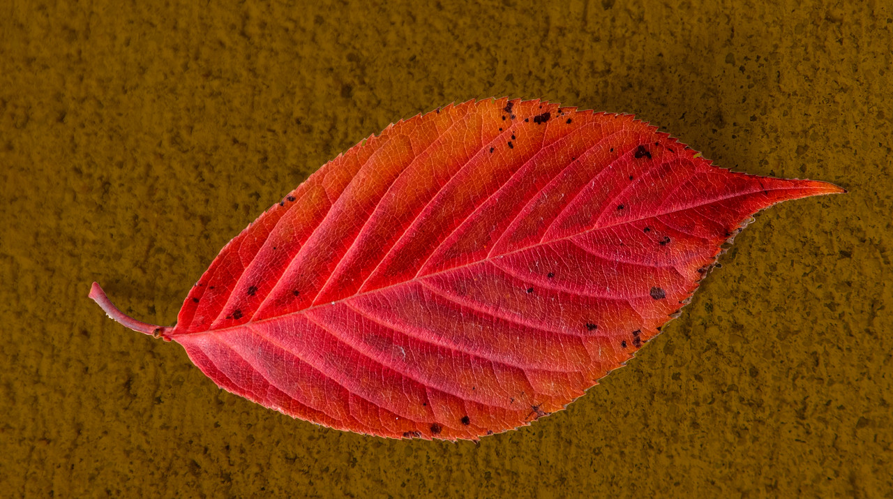 Close-up of a leaf I took around Hyatt House where were staying.