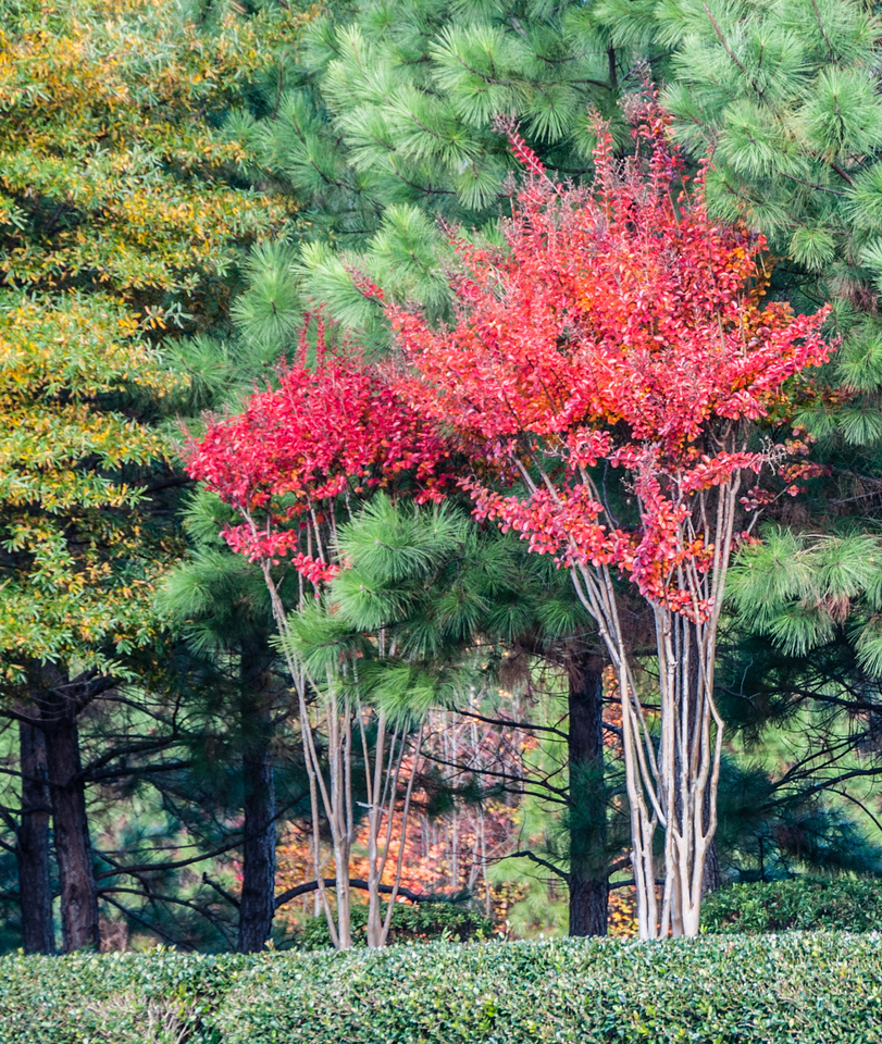 Fall color photos I took around the Hyatt House in Richmond-West, VA