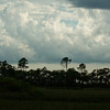 Scenic view from Turner River Road in the Florida Everglades