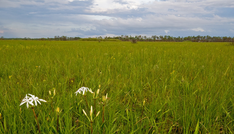 Florida Everglades - Scenic view from Birdon Road