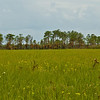 Florida Everglades - Scenic view from Birdon Road