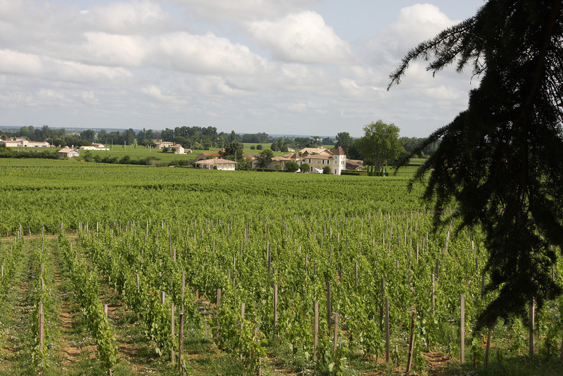 The beautiful vineyards of Chateau Franc Mayne in Saint Emilion