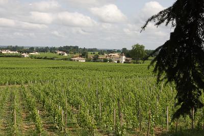 The beautiful vineyards of Chateau Franc Mayne in Saint Emilion