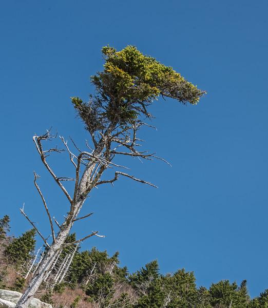 Interesting looking tree