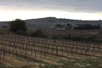 The historic vineyards of Mas de Janiny, our final stop in St. Bauzille de la Sylve.