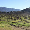 The beautiful setting of the Nelson Family Vineyards.