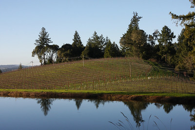 Toulouse has this beautiful, small pond up near the hillside vineyards.