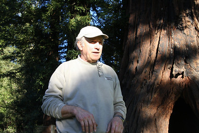 Vern showing us a 1,500 year old Redwood Tree.