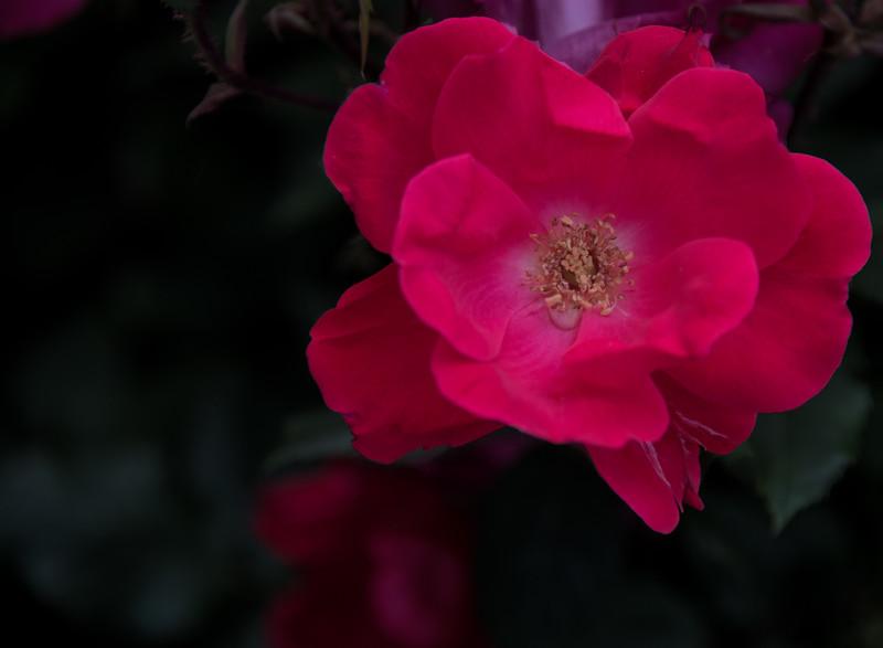 •Location - Wilmington NC<br /> • Camellia