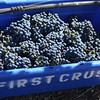The journalists took a stab at picking grapes. The result: Merlot is easy; Cabernet is not so easy! That sort of makes sense though, doesn't it?