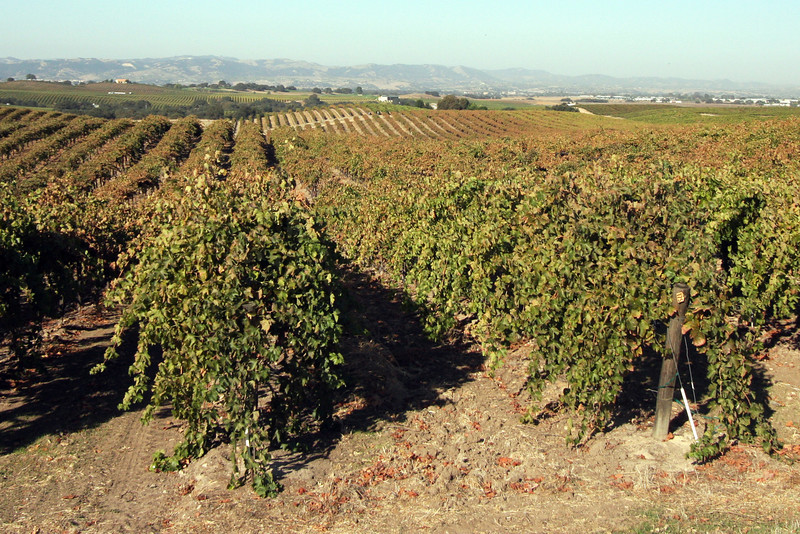 I joined a group of wine journalists in October 2010 for a visit to Paso Robles. One of our stops was the 600-acre Steinbeck Vineyards.