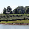 Nice shot of Huber Orchard and Winery Vineyards near the property entrance.