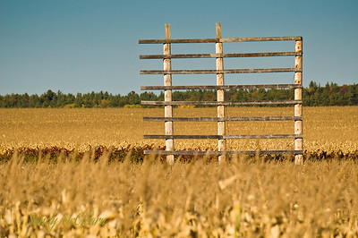 Scenery along Highway 17 between Pembroke and Ottawa in early October as the fall colours begin to appear. An old billboard sign support in a field.