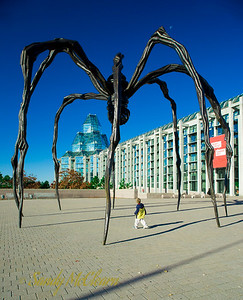 A child gazes up at the spider scupture in front of the National Art Gallery.