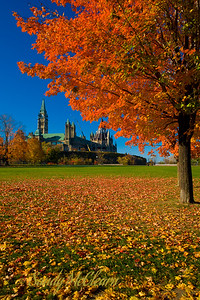 The Parliament Buildings are framed by a tree in autumn.