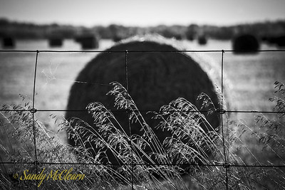 Scenery along Highway 17 between Pembroke and Ottawa in early October as the fall colours begin to appear. Grass intertwines with a wire mesh fence while hay bales sit in a field in the background.