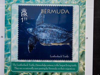 a Whole series of posters hung on the city's post office show off the country's stamps issued on behalf of vanishing turtles that were once so common here.