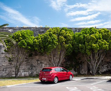 Trees along the wall of the fort at the Royal Boatyards.