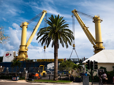Giant cranes on an anchored freighter frame a Hamiltonian palm tree.