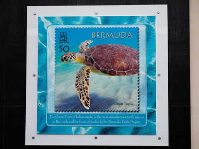 Yet another poster showing off some of the turtles that inhabit the waters of the island.