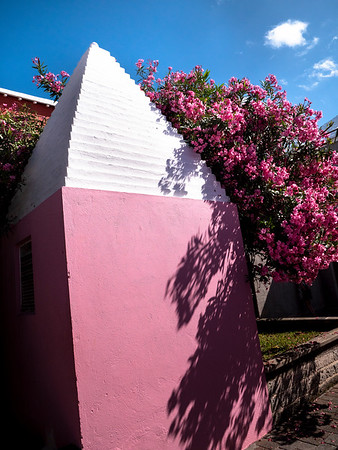 House wall with flowering tree. The white rooves of Bermuda are terraced to collect the maximum amount of rain to be used as drinking water. There is no other natural source of water on the island. The water from the roof is stored in a cistern under each house.