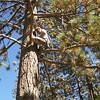 I think Doug missed his calling as a telephone repair man. I saw him get up in this tree and I'm still amazed he did it.