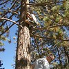 Whose that Monkey in the tree? Doug goes to extreme lengths to clean up our trail. He's getting a rope someone used to hang their food out of the tree. (btw- he's way up there, Richard's standing on Doug's Jeep)