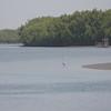 Allahein river: grey heron fishing the shallows