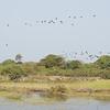 Kartong bird reserve