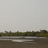 Salt marsh behind Kartong beach