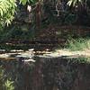 Pond at Abuko NR