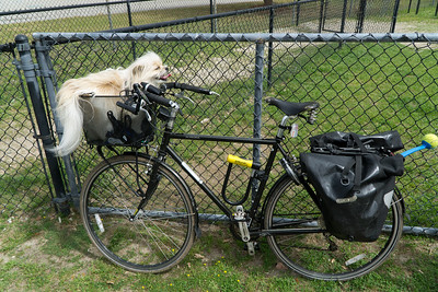 We took our bikes—and Biggie—to the park. It's a doggie in a basket.