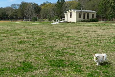 Biggie's got the ball. At a park in Savannah.