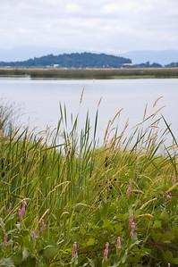 Fern_Ridge_Reservoir_010