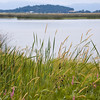 Fern_Ridge_Reservoir_010