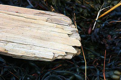 Driftwood on the beach, Belfast