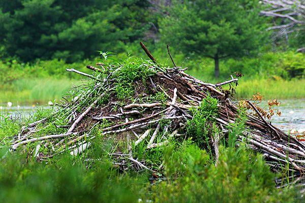 Beaver Lodge, Acadia