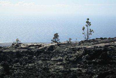 A more recent lava flow, but vegetation is already beginning to take hold.