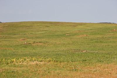 2008-07-05_16-55-26_foss