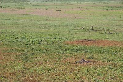 2008-07-05_16-54-57_foss