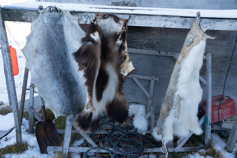 Seal, Wolverine, Fox pelts
