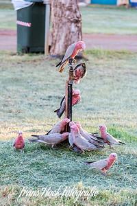 Birds drinking water.