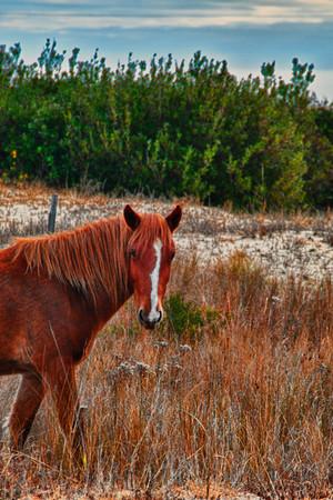 Wild Horse, Corova, NC